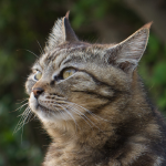 @dreamy-cat