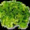 jvillard