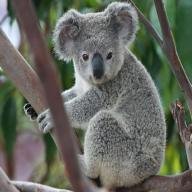@koala1314