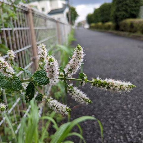 Cong's avatar