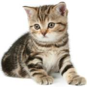 @Catfriend1