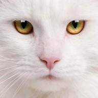 @javenwang