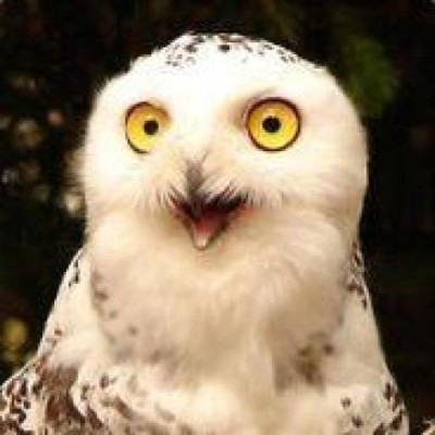 Crazy Owl Vladimir 183 Github