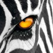 @random-zebra