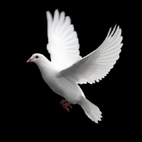 Avatar of AvianY