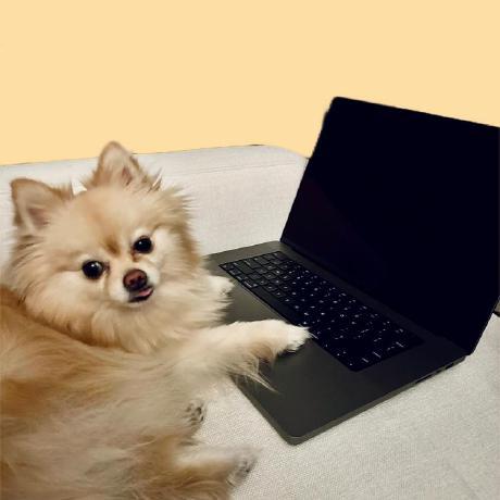 Blaire Zhang