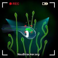 @NeuBtracker