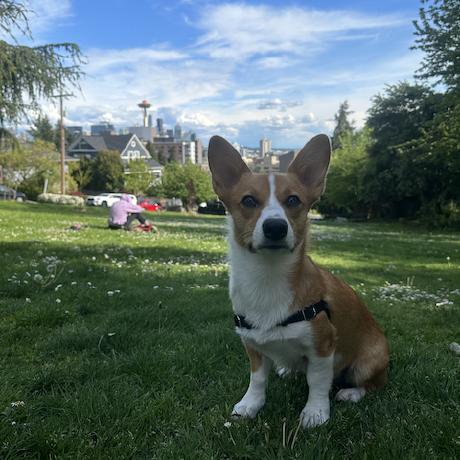 Andrew Emery's avatar