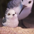 @Chul-and-baby-birds