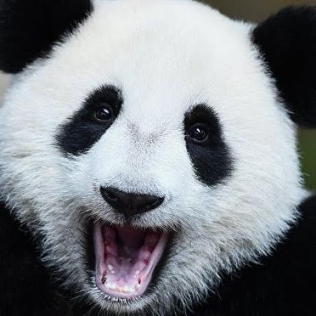 Eric Li's avatar