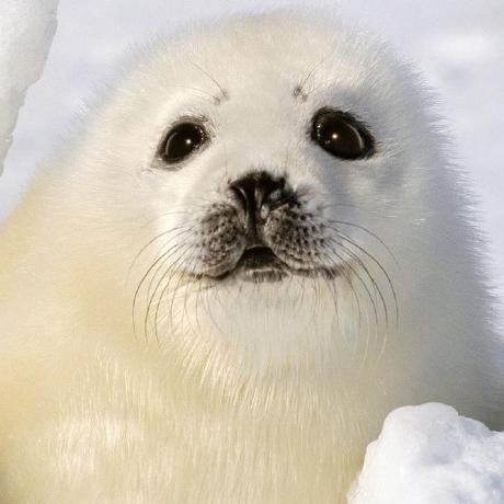 Avatar of sealday