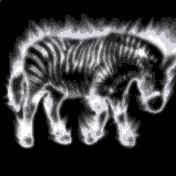 Avatar of zebrainflames