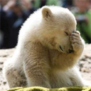 p0lar_bear