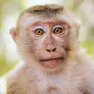 João Baltazar