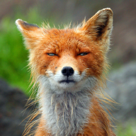 @foxweb