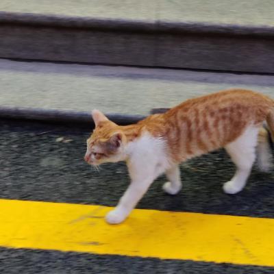 richardchien (Richard Chien) · GitHub