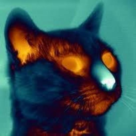 Avatar of thermalCat