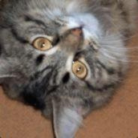 Avatar of sevenseacat