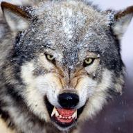 @killingwolf