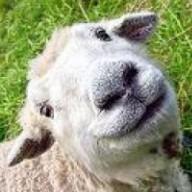 @sheepsy90