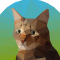 @codeandcats