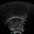 @arizona-phonological-imaging-lab