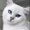 @yurytut1993