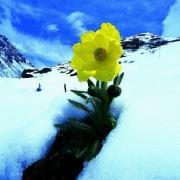 snowsolf