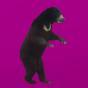 @mi-bear