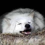 @melchior-voidwolf